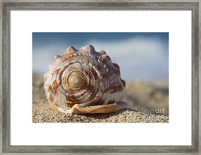 Hawaii Gentle Breeze Framed Print by Sharon Mau