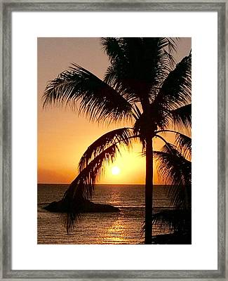Hawaiian Palm At Sunset 2 Framed Print by Gary Lysaght