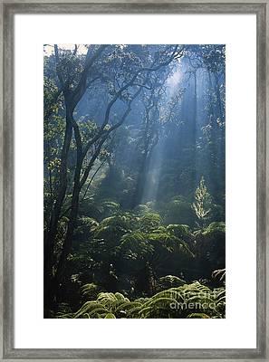 Hawaiian Rainforest Framed Print by Gregory G. Dimijian, M.D.