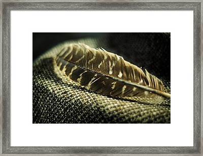 Hawk Feather  Framed Print by Rebecca Sherman