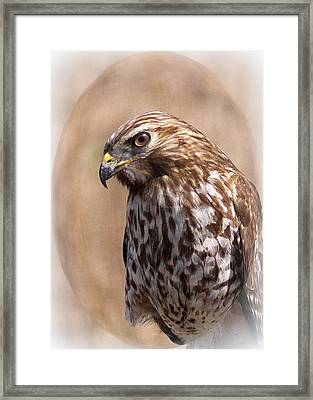 Hawk - Sphere - Bird Framed Print by Travis Truelove