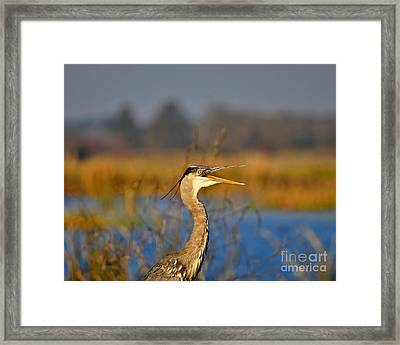 Hawking Heron Framed Print by Al Powell Photography USA