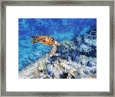 Hawksbill Turtle Framed Print by Don  Ray