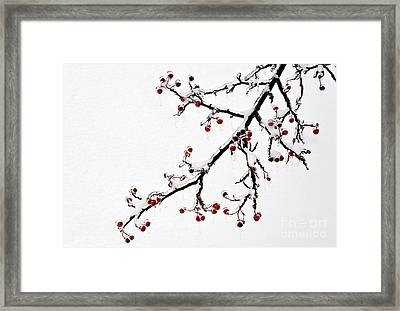 Hawthorn Ice And Snow - D004830 Framed Print by Daniel Dempster