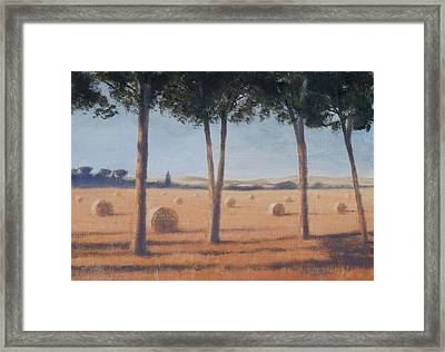 Hay Bales And Pines, Pienza, 2012 Acrylic On Canvas Framed Print by Lincoln Seligman