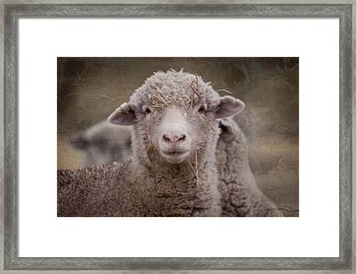 Hay Ewe Framed Print by Michelle Wrighton