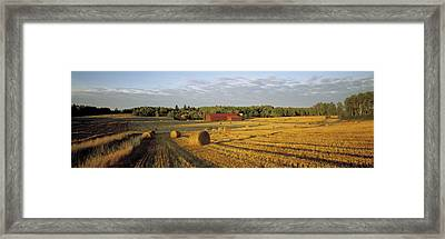 Hay Field Sweden Framed Print by Panoramic Images