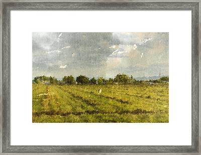 Hay Fields In September Framed Print by Brett Pfister