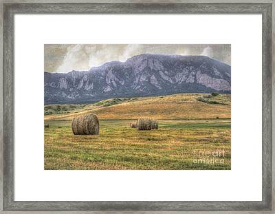 Hay There Framed Print by Juli Scalzi