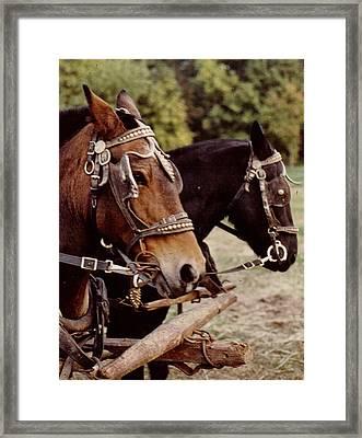 Hayride  Horses Framed Print by Wide Awake Arts