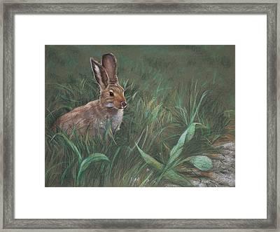 Hazel Framed Print by Christopher Reid