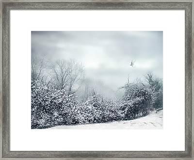 Hazy Shade Of Winter Framed Print by Jessica Jenney