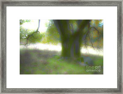 Hdr Tree Framed Print by Graham Foulkes