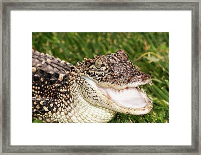 Head And Shoulders Of Juvenile Framed Print by Piperanne Worcester