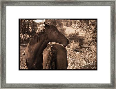 Head And Tail Framed Print by Madeline Ellis