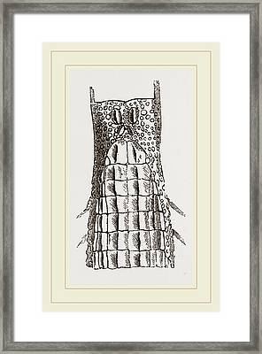 Head And Tongue Of Chameleon Framed Print by Litz Collection