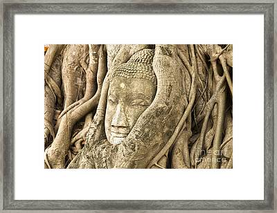 Head Of Buddha Ayutthaya Thailand Framed Print by Colin and Linda McKie