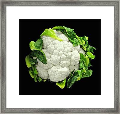 Head Of Cauliflower Framed Print by Diana Angstadt