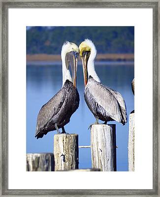 Head To Head Framed Print by Phyllis Beiser