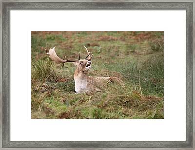 Hear Me Roar Framed Print by Mark Severn