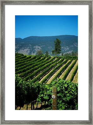 Heard It Through The Grapevine Framed Print by Lisa Knechtel