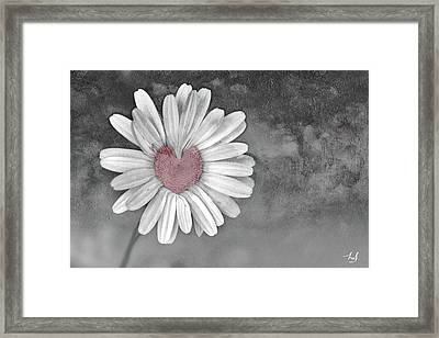 Heart Of A Daisy Framed Print by Linda Sannuti
