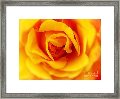 Heart Of A Rose Framed Print by Ella Kaye Dickey