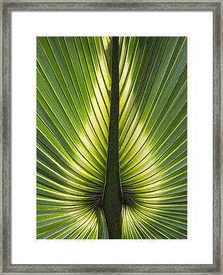 Heart Of Palm Framed Print by Roger Leege