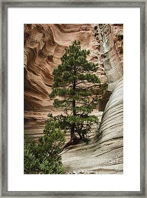 Heart Of The Canyon Framed Print by Terry Rowe