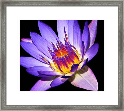 Heart Of The Matter Framed Print by Diana Angstadt