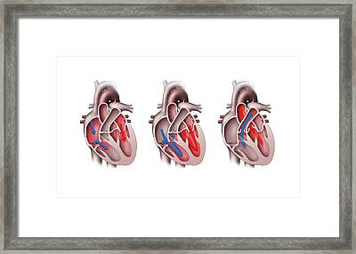 Heart Pumping Framed Print by Henning Dalhoff