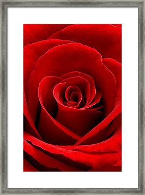 Heart Rose Vertical Framed Print by Dawn  Black