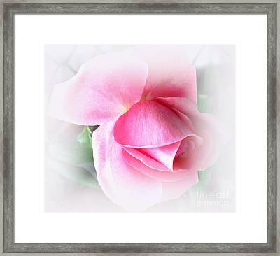 Heartfelt Pink Rose Framed Print by Judy Palkimas