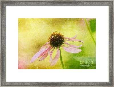 Heart's Desire Framed Print by Lois Bryan