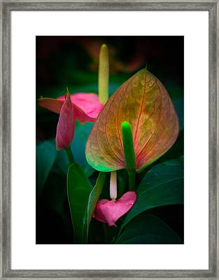 Hearts Of Joy Framed Print by Karen Wiles