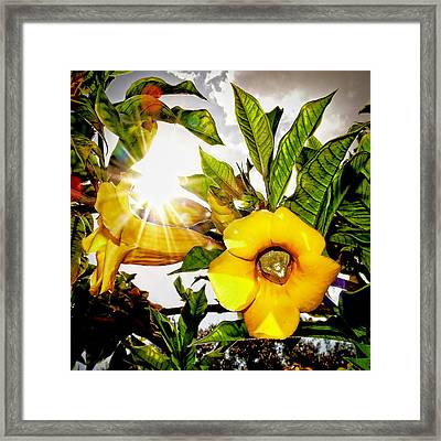 Heat Of The Day Framed Print by Stuart Harrison