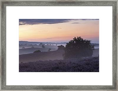 Heather Field In Morning Gelderland Framed Print by Ronald Kamphius