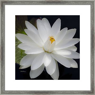 Heavenly Aquatic Bloom Framed Print by Julie Palencia