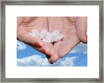 Heavenly Blossoms Framed Print by Lisa Knechtel