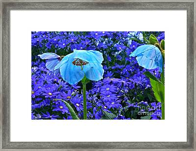 Heavenly Blue On Blue And Purple Framed Print by Byron Varvarigos