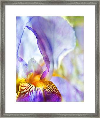 Heavenly Iris Framed Print by Theresa Tahara