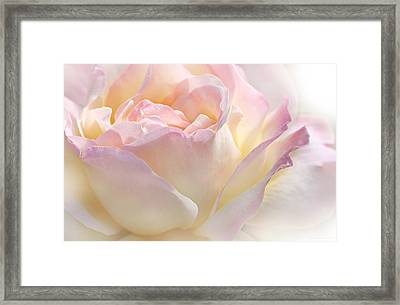 Heaven's Pink Rose Flower Framed Print by Jennie Marie Schell