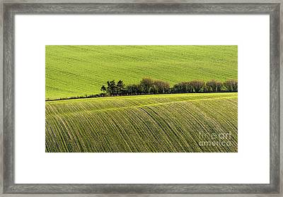 Hedgerow Conga Framed Print by Richard Thomas
