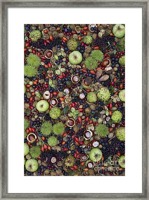 Hedgerow Harvest Framed Print by Tim Gainey