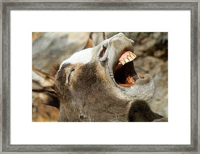 Hee - Haw Framed Print by Donna Kennedy