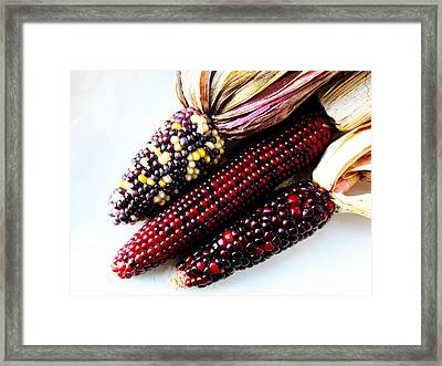 Heirloom Corn Framed Print by Tina M Wenger