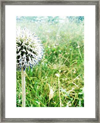 Hello Framed Print by Lucy D