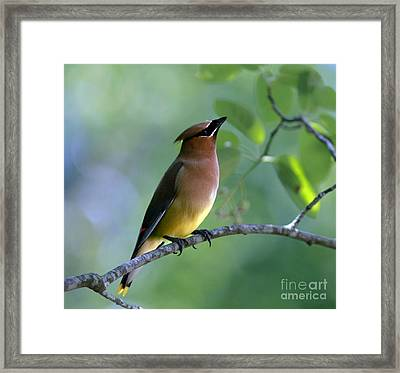 Hello Up There Framed Print by Inspired Nature Photography Fine Art Photography