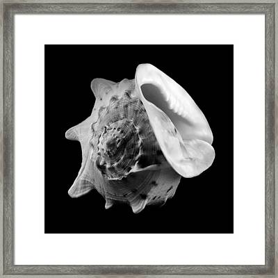 Helmet Shell Framed Print by Jim Hughes