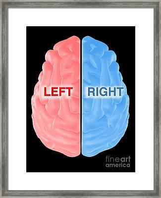 Hemispheres Of The Brain Framed Print by Scott Camazine